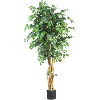 6'  Palace Style Ficus Silk Tree