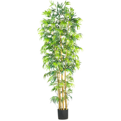 Bambusa Bamboo Silk Tree