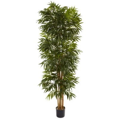 7.5' Phoenix Palm Tree