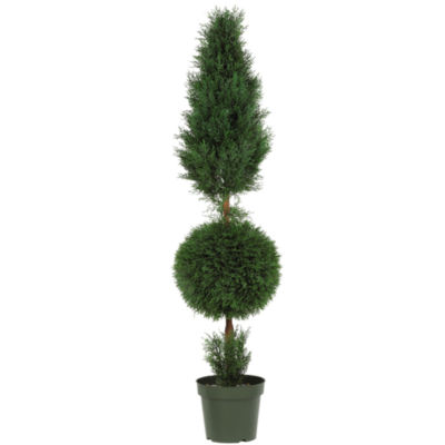 5' Cypress Ball And Cone Silk Tree Indoor/Outdoor