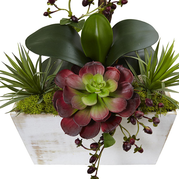 Nearly Natural Seasonal Orchid & Succulent Garden With Planter