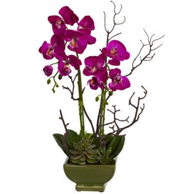 Orchid & Succulent Floral Arrangement