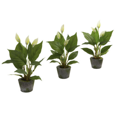 Spathiphyllum With Cement Planter Set Of 3