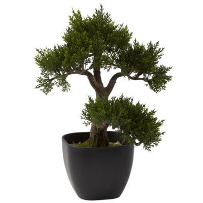 """15"""" Cedar Bonsai"""