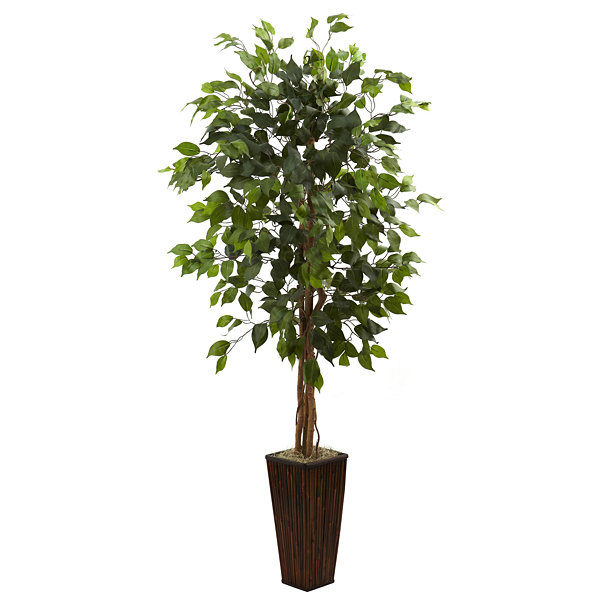 5.5' Ficus Tree With Bamboo Planter