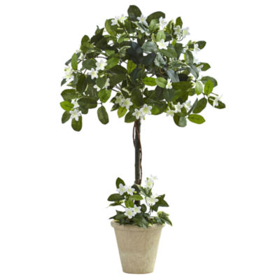 3' Stephanotis Topiary With Planter