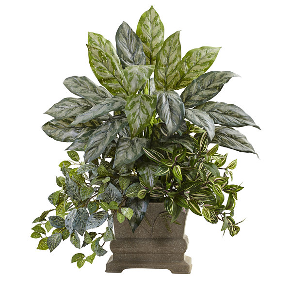 "28"" Mixed Silver Queen, Wandering Jew & Fittonia With Planter"