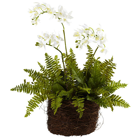 Nearly Natural Mini Phalaenopsis & Fern With Birds Nest Planter
