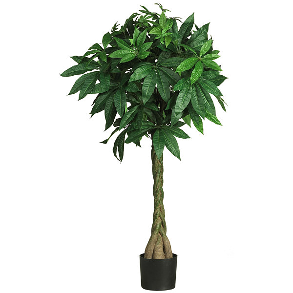 Nearly Natural 51 Braided Money Tree