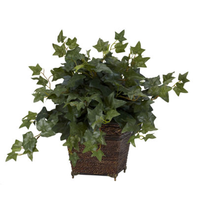 Puff Ivy With Coiled Rope Planter Silk Plant