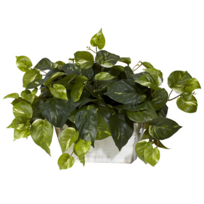 Pothos With White Wash Planter Silk Plant