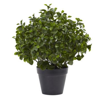 "23"" Peperomia Plant UV-Resistant Indoor/Outdoor"