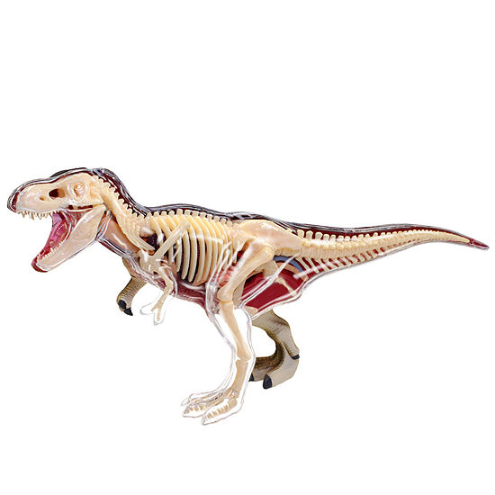4D-Vision T-Rex Anatomy Model