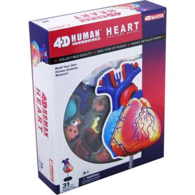 4D-Human Heart Anatomy Model
