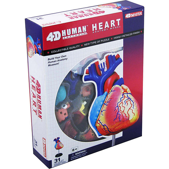 4D-Human Heart Anatomy Model