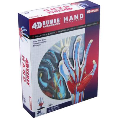 4D-Human Hand Anatomy Model