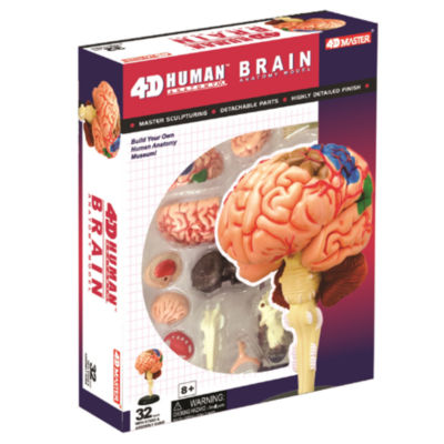 4D-Human Brain Anatomy Model