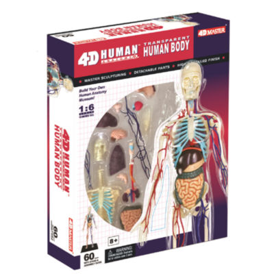 4D-Transparent Human Body Anatomy Model