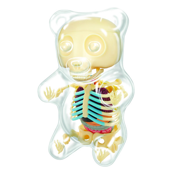 4D Master 4D Vision Gummi Bear Anatomy Model