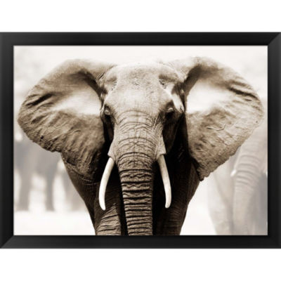 African Elephant Framed Print Wall Art