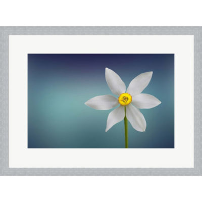 Flower Of Paradise Framed Print Wall Art