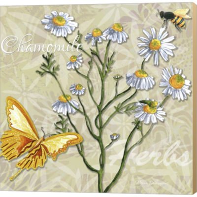 Metaverse Art Herbs 3 Chamomile Gallery Wrapped Canvas Wall Art