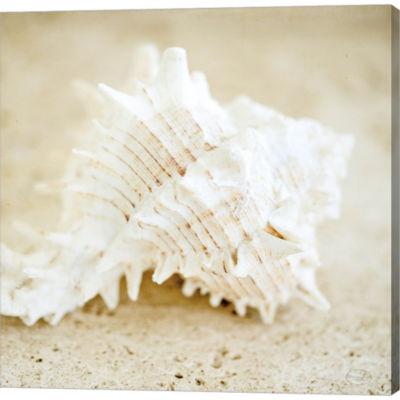 Metaverse Art Seashore Shells II Gallery Wrapped Canvas Wall Art