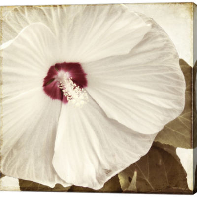 Alabaster Hibiscus Gallery Wrapped Canvas Wall ArtOn Deep Stretch Bars