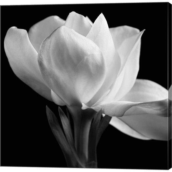 Metaverse Art Gardenia Gallery Wrapped Canvas WallArt