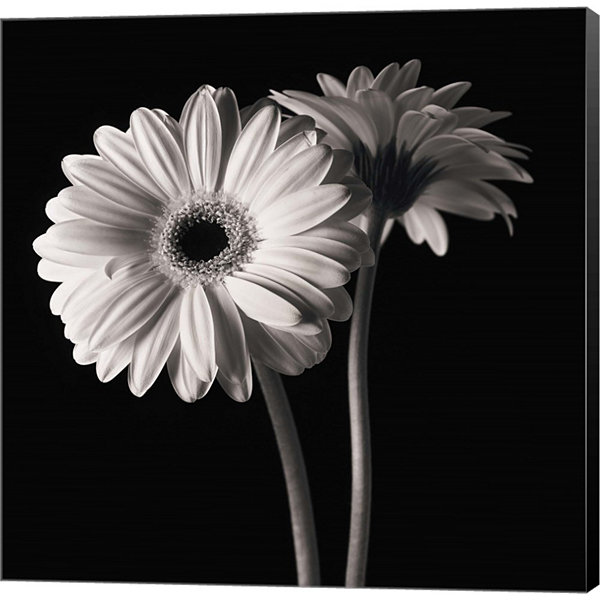 Metaverse Art Gerber Daisies 1 Gallery Wrapped Canvas Wall Art