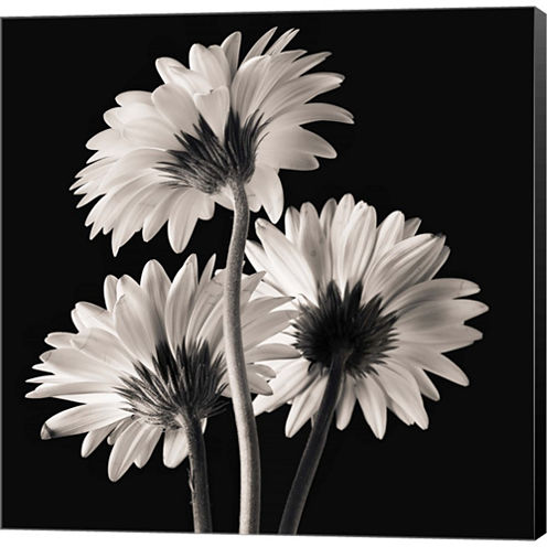 Gerber Daisies 2 Gallery Wrapped Canvas Wall Art On Deep Stretch Bars