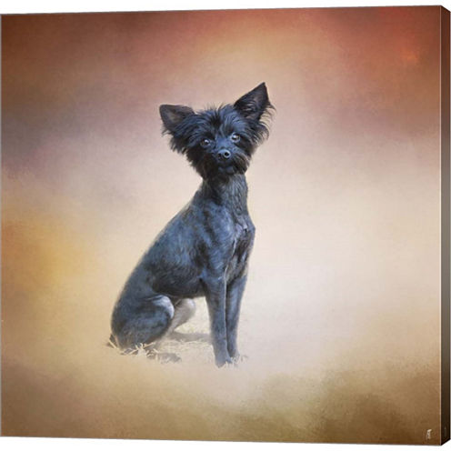 Little Angel Yorkie Poo Gallery Wrapped Canvas Wall Art On Deep Stretch Bars
