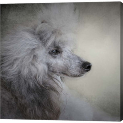 Longing Silver Standard Poodle Gallery Wrapped Canvas Wall Art On Deep Stretch Bars