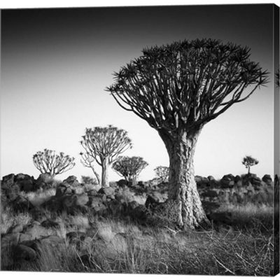 Metaverse Art Namibia Quiver Trees Gallery WrappedCanvas Wall Art