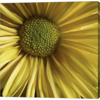 Yellow Daisy Gallery Wrapped Canvas Wall Art On Deep Stretch Bars