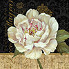 Metaverse Art Antique Still Life Peony by Pamela Gladding Gallery Wrapped Canvas Wall Art