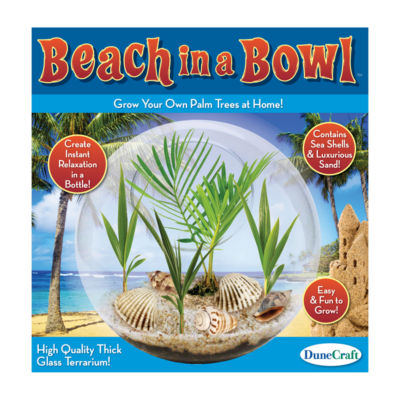 Dunecraft Glass Terrarium - Beach in a Bowl