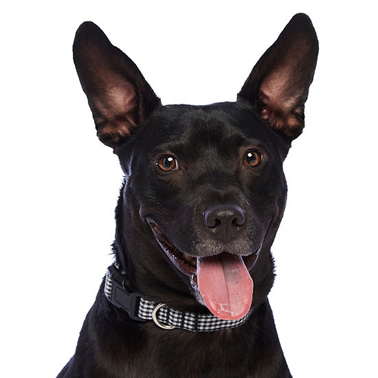 PAW & TAIL Gingham Dog Collar