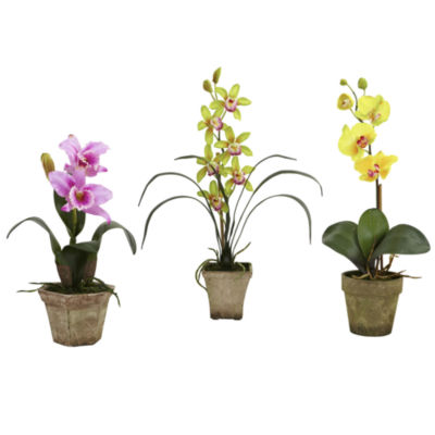 Potted Set Of 3 Orchid Mix