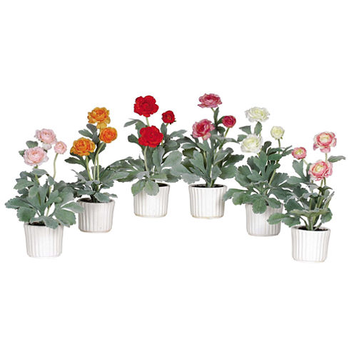 Nearly Natural Ranunculus With White Vase Set Of 6