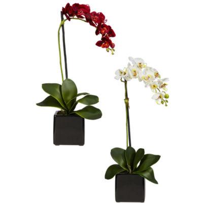 Phalaenopsis Orchid with Black Vase Silk Arrangement - Set of 2