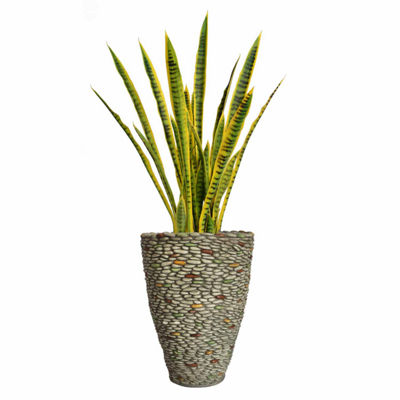 49 Inch Tall Snake Plant In Faux-Pebble Planter