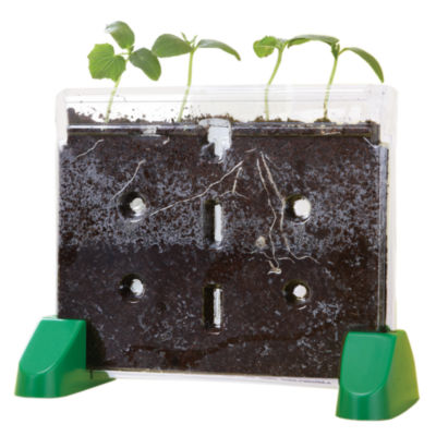 Educational Insights Sprout & Grow™ Window