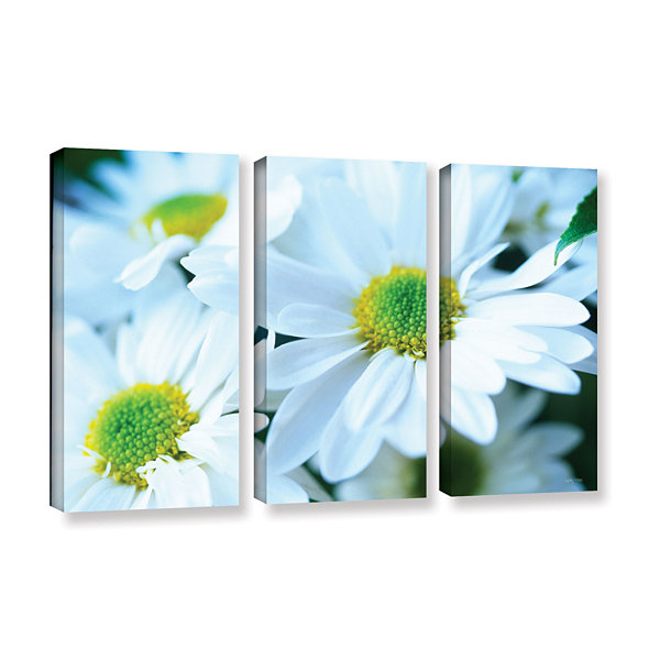 Brushtone Fresh Daisies 3-pc. Gallery Wrapped Canvas Wall Art