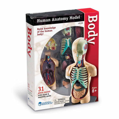 Learning Resources Human Body Anatomy Model