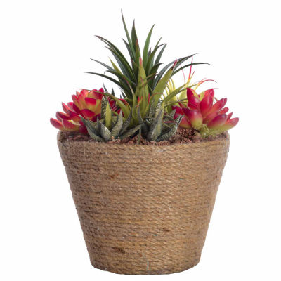 "Laura Ashley 10.5"" Tall Succulents In Hemp Rope Container"