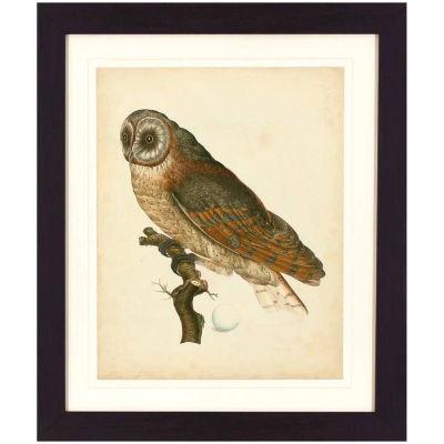 Decor Therapy Antique Owl in Dark Walnut Wood Grain Frame