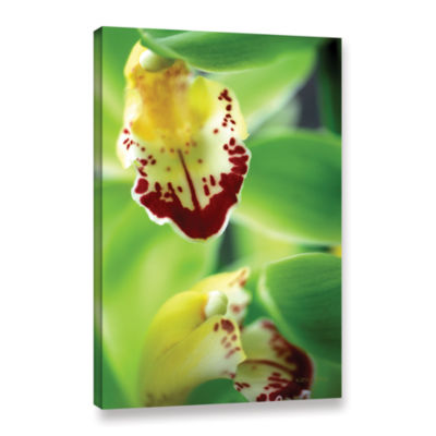 Brushstone Cymbidium Seafoam Emerald Orchid Gallery Wrapped Canvas Wall Art