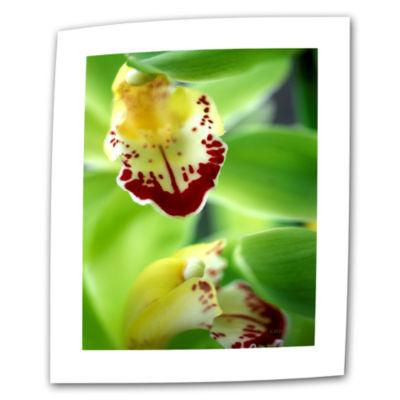 Brushstone Cymbidium Seafoam Emerald Orchid CanvasWall Art