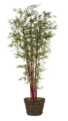 "Laura Ashely 100"" Tall Harvest Bamboo Tree In Planter"